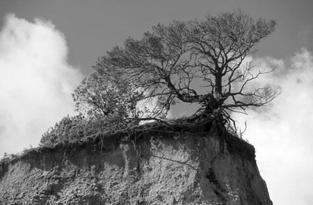 Arbre au colorado proven al noir et blanc arbres - Arbre provencal ...