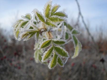 Paysage d'hiver © gilles lafrogne ( 7 photos )