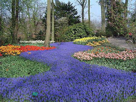 Voyage vers la Hollande aujourd'hui pour revoir le site unique de Keukenhof (Lisses, Pays-Bas), à l'apogée de ses floraisons. Pt23850