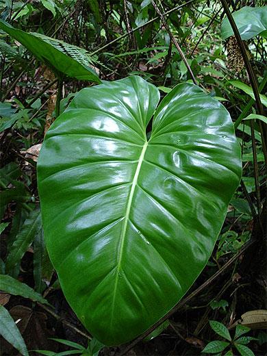 plante tropicale photo