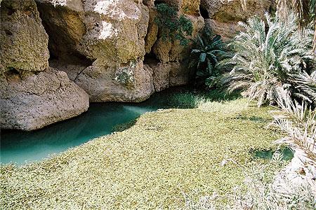 piscine naturelle dubai