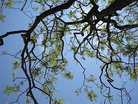 arbre ciel et le soleil arbres mahabalipuram mamallapuram - Arbre Ciel