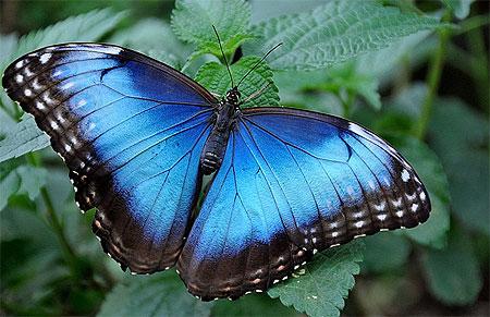 Les Papillons Pt106582