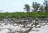 Bird Island - Seychelles