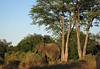 Matusadona National Park - Zimbabwe
