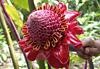 Jardin des Parfums et des Épices - Réunion