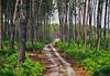 Parc naturel régional des Landes de Gascogne - Aquitaine