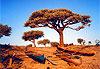Tuléar (Toliara) - Madagascar