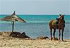 Djerba (Jerba) - Tunisie