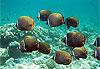 Atoll de Baa - Maldives