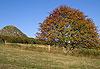 Mont Gerbier-de-Jonc - Ardèche, Drôme