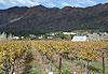 Région des vignobles - Afrique du Sud