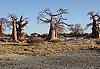 Parc transfrontalier de Kgalagadi - Botswana