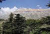 Réserve de la Forêt des Cèdres de Dieu - Liban