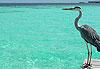Atoll d'Ari Sud - Maldives