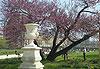 Le jardin des Tuileries - Paris