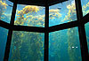 Monterey Bay Aquarium - Californie