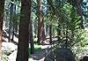 Sequoia National Park - Parcs nationaux de l'Ouest américain