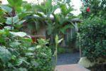 Photo hotel L'Escale Tropicale