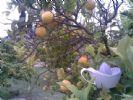 Photo hotel B&B Lemontree Garden