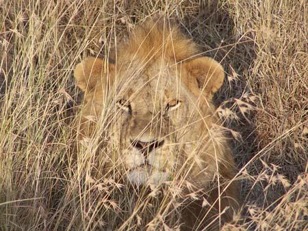 Rêver de Lion dans LION pt4464
