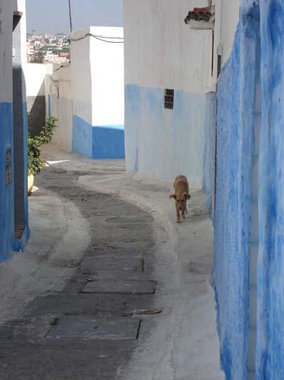بجولة سياحية المغرب مستعد pt4724.jpg
