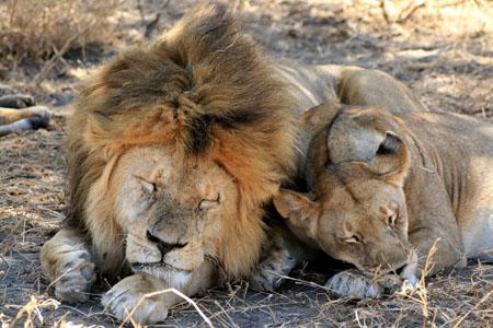 pt7725 dans LION