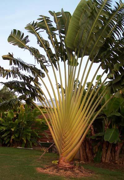 palmier - 15 degres