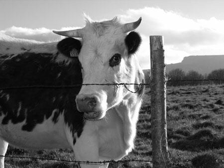 Message du peuple des Vaches 2 dans VACHE - BOEUF.... pt8599