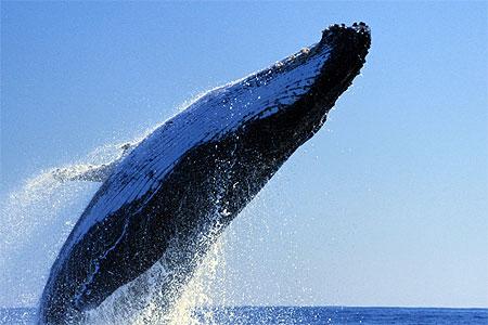 Contact avec la Baleine dans BALEINE pt10418