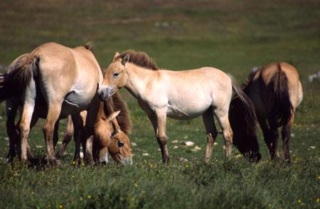 L'exploitation minière menace les éleveurs mongols
