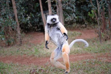 صور لحيوانات ناذرة لن تجدها إلا على منتدانا الغالي 'منك و إليك' Pt13424