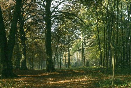 Une forêt, lieu de rencontre entre une Amazone et un Pirate de Shanks Pt17434