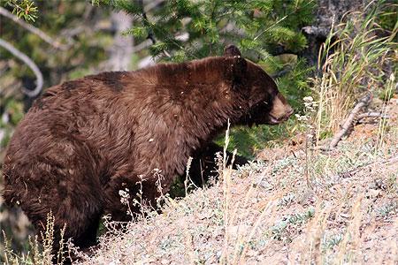 Des noms d'ours  dans OURS pt18536