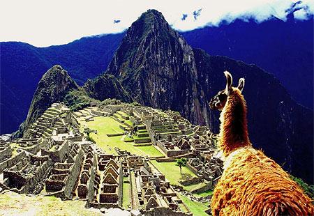 Le Lama et les Incas dans LAMA pt20620
