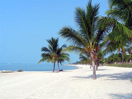 Palmars des plages. - Visit Florida