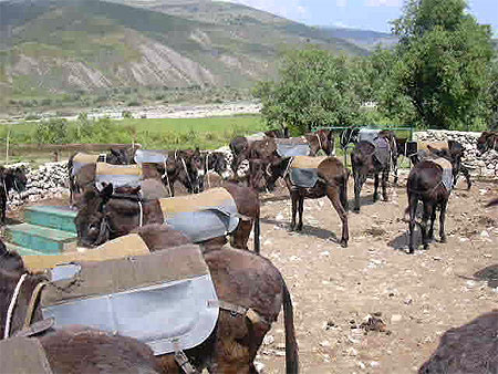 L'âne sauvage africain dans ANE pt33719