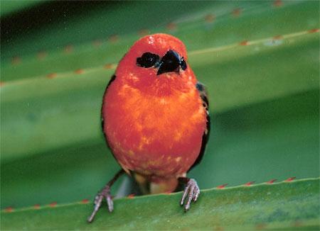 Le Langage des Oiseaux 3 dans OISEAUX pt38953