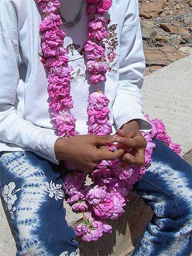 Collier de rose dans la vallée du Dadés