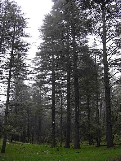 PETITION : Tous ensemble, pour sauver les arbres d'Oujda (Maroc)