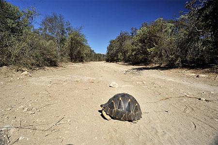 20 tortues en voie d'extinction sont réintroduites