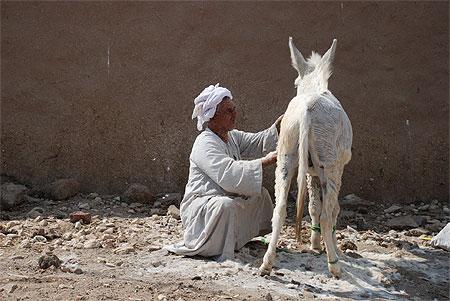 L'âne sauvage asiatique dans ANE pt52972