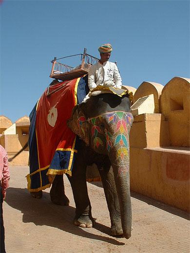 Abraha et L'éléphant dans ELEPHANT pt61412