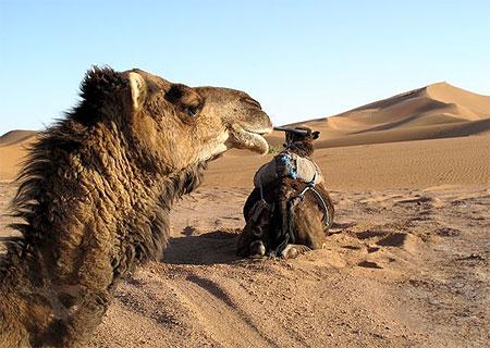 بجولة سياحية المغرب مستعد pt78024.jpg