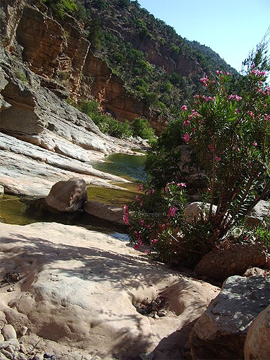 بجولة سياحية المغرب مستعد pt79826.jpg