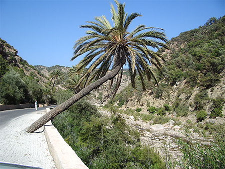 بجولة سياحية المغرب مستعد pt79830.jpg