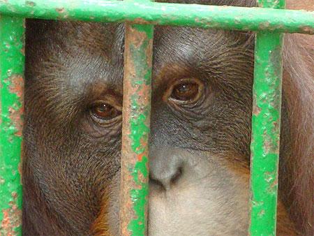 Initiative : Pas d'huile de palme au zoo de Maubeuge