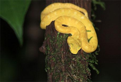 Le Serpent nous dit dans SERPENT pt95863