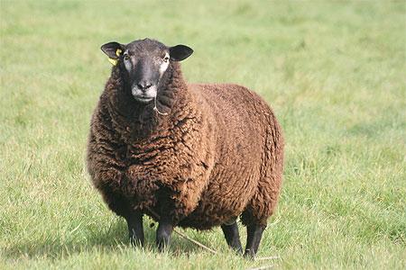 Le Mouton Noir [1979]