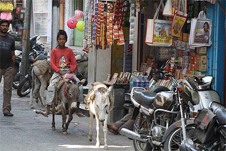 L'âne d'Inde dans ANE pt114121
